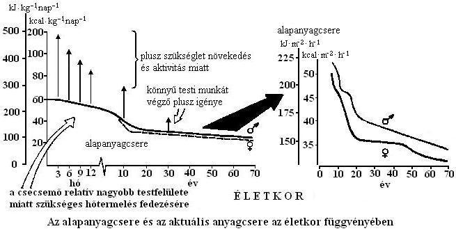 zsírvesztés glikogén kimerülés