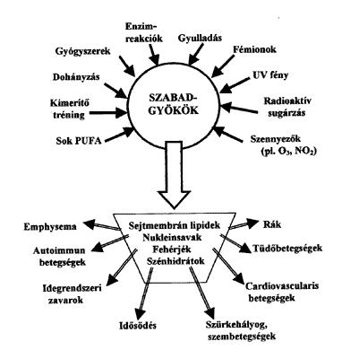 t4 tiroxin zsírvesztés)